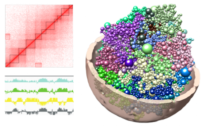 Computational 3D genome modeling